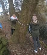 Uczniowie mierzą obwód drzewa
